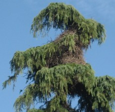 nest-zoom
