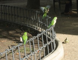 parrots-with-pidgeon