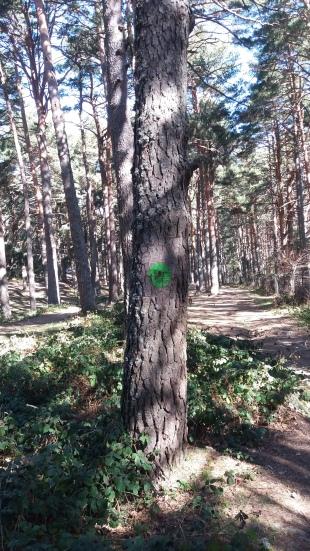 aa-green-dots